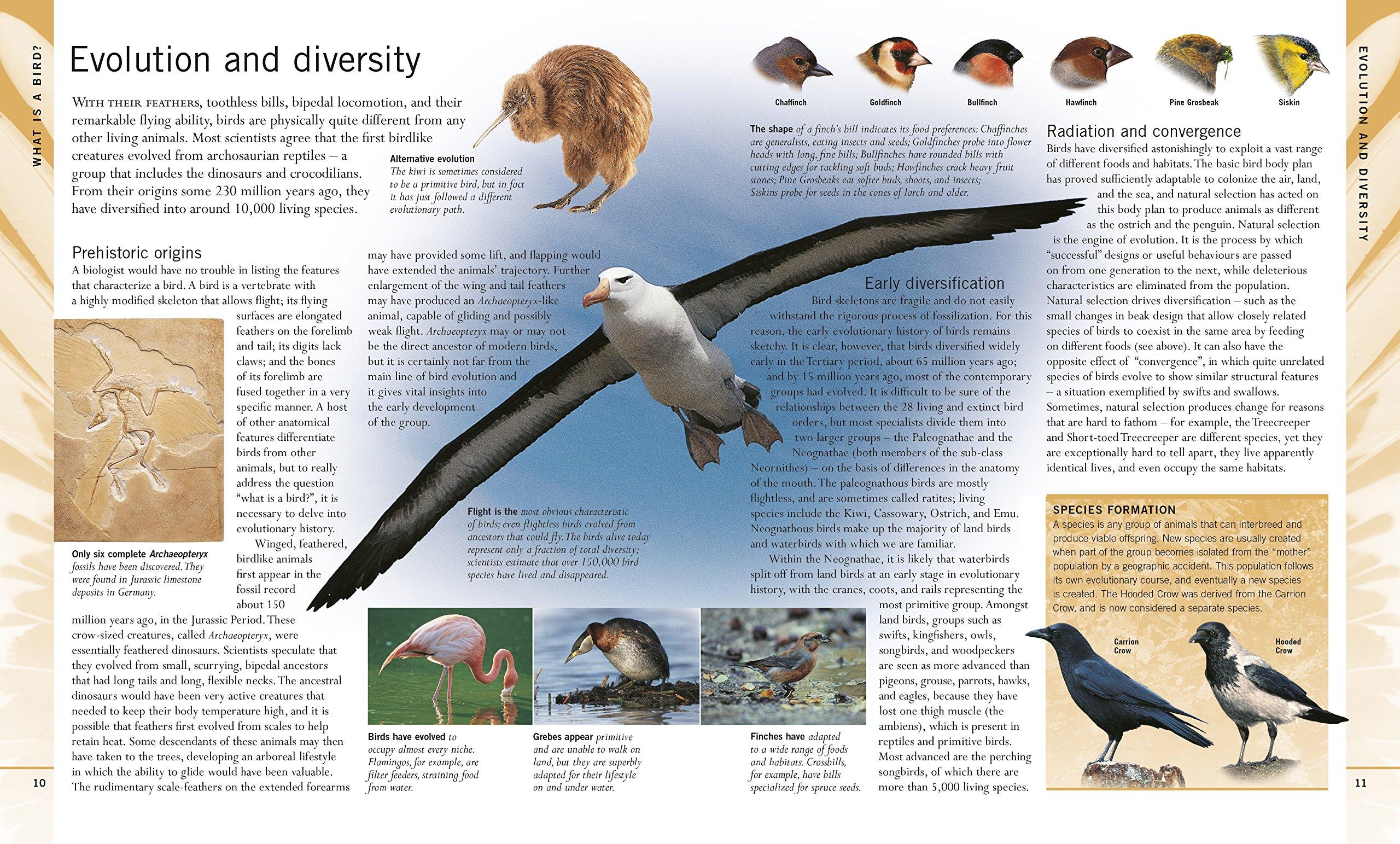 BIRD WATCHING FOR BEGINNERS EBOOK DOWNLOAD