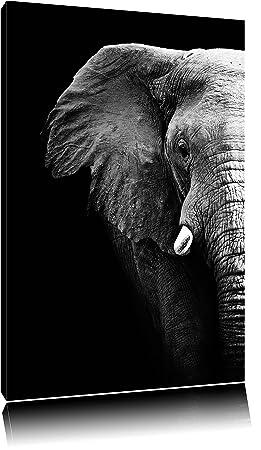 elephant portrait format toile 100x70auf xxl normes photos compltement encadrs par la civire - Cadre Elephant