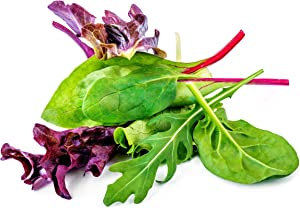 Lettuce Mix Seeds for Planting - Hydroponics - 500 Heirloom Seeds Variety Packet!