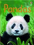Pandas (Beginners Series)