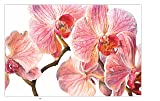 Rosie Sanders' Flowers: A Celebration of Botanical