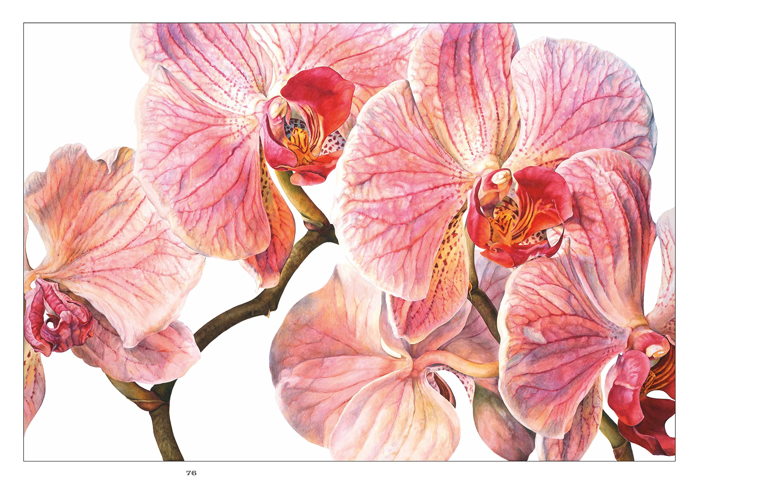 Rosie Sanders Flowers A Celebration Of Botanical Art Rosie