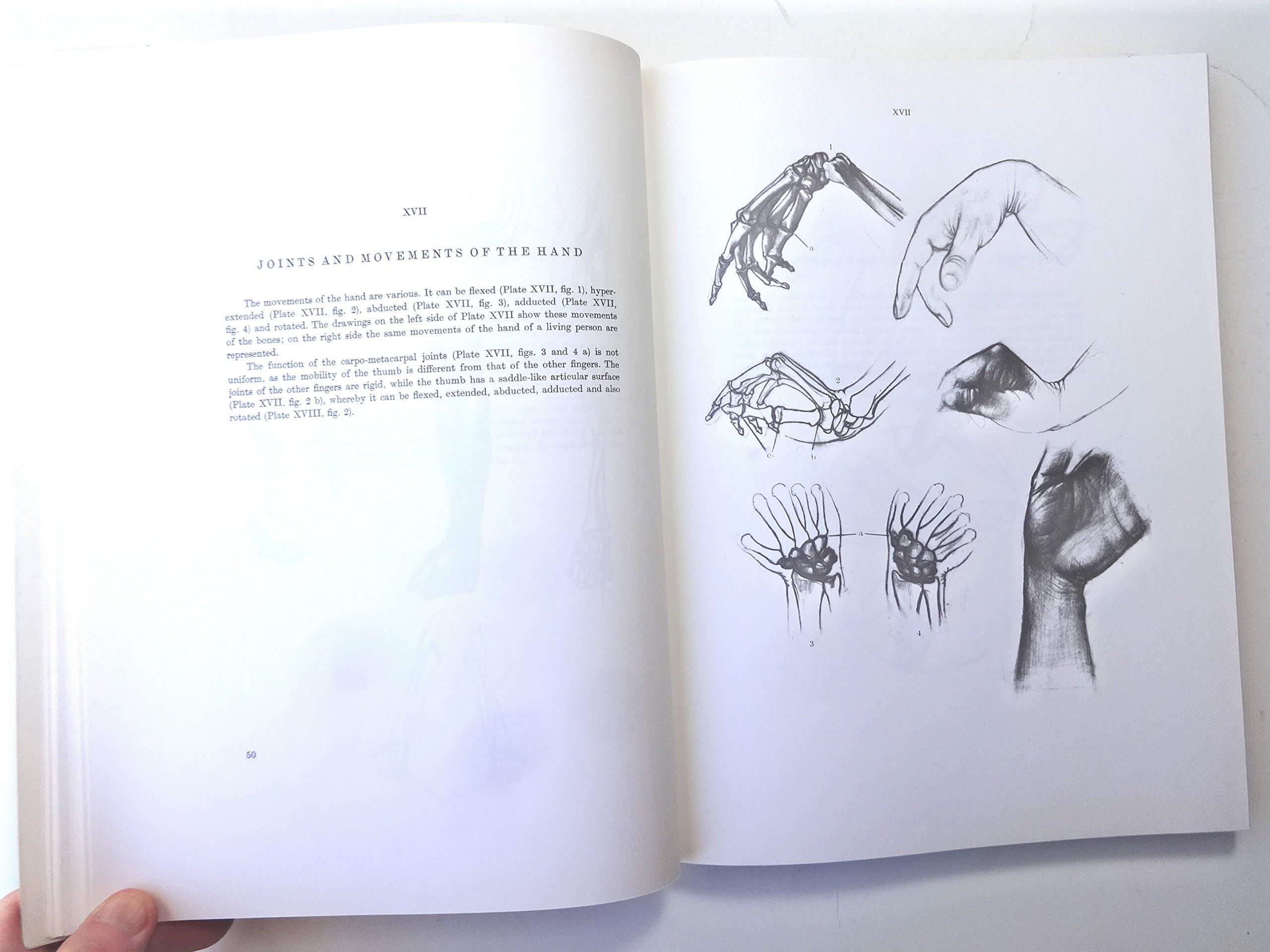 Anatomy For The Artist Jeno Barcsay 9780814800102 Books Amazon
