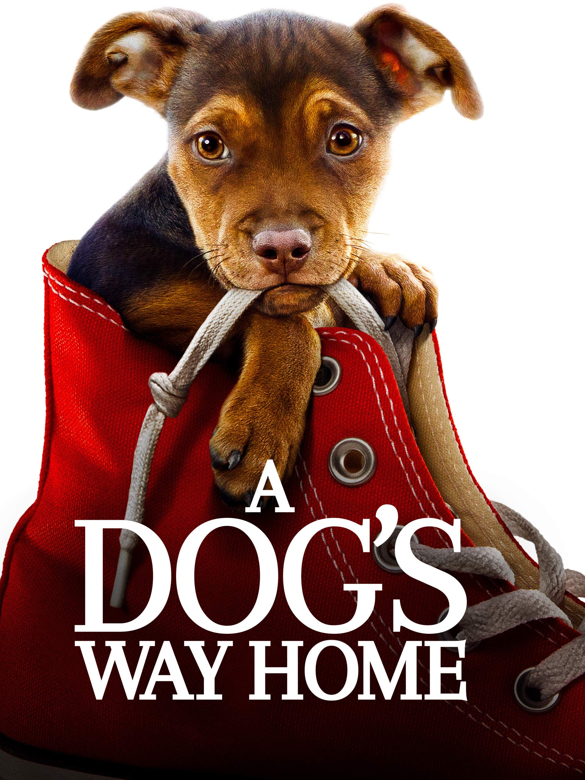 Amazoncom Watch A Dogs Way Home Prime Video