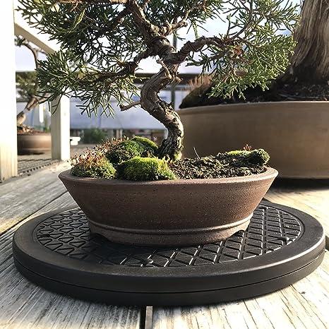 bonsaioutlet Mini de acero inoxidable árbol de Bonsai Tocadiscos ...