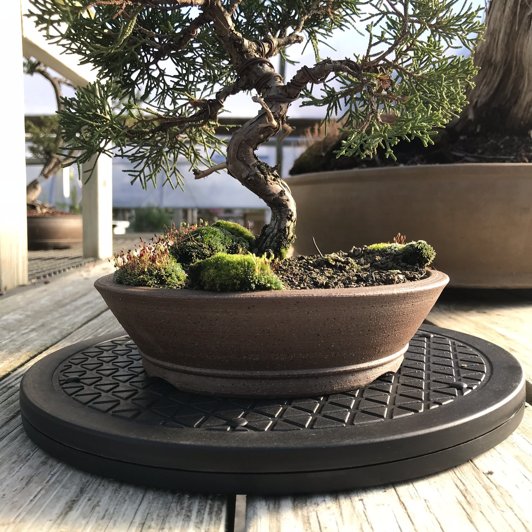Mighty Mini Bonsai Tree Turntable 10'' Base Stainless Steel Low Cost 200-Pound Capacity 360-Degree Rotation Allows Easy Pruning Or Great Bonsai Tree Displays