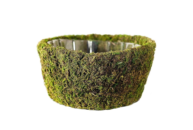Super Moss (55100) Roseville, Fresh Green, Set of 3 (S/M/L) Supermoss 7 59834 55100 3