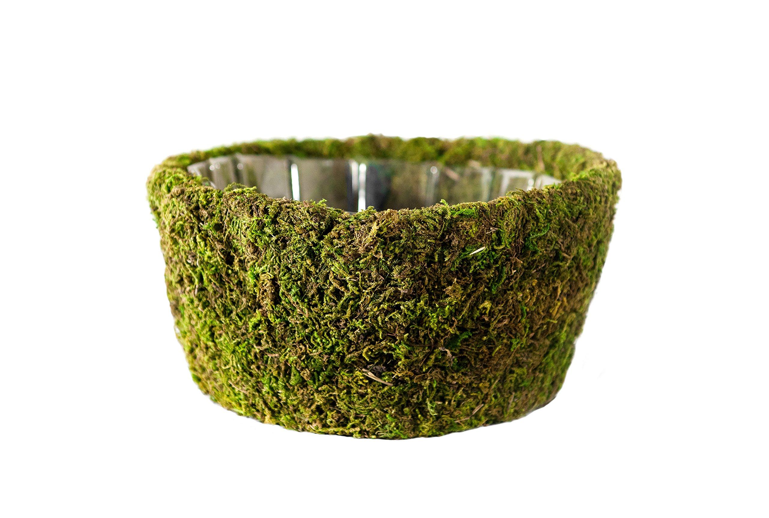 Super Moss (55102) Roseville, Fresh Green, Medium