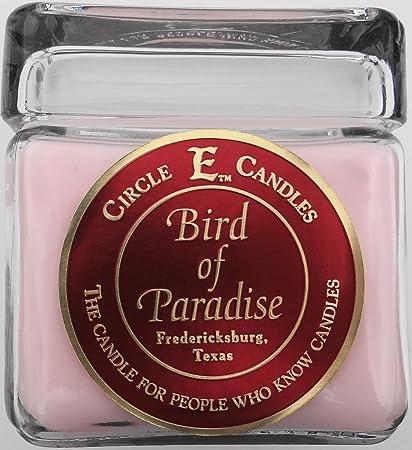 Amazon.com  Circle E Candles 28oz Birds of Paradise 9a8730787b