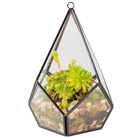 Amazon Com Glass Terrarium Succulent Air Plant Tear Drop