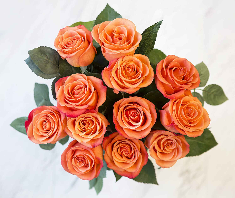Amazon Kabloom Bouquet Of 12 Fresh Cut Orange Roses Long