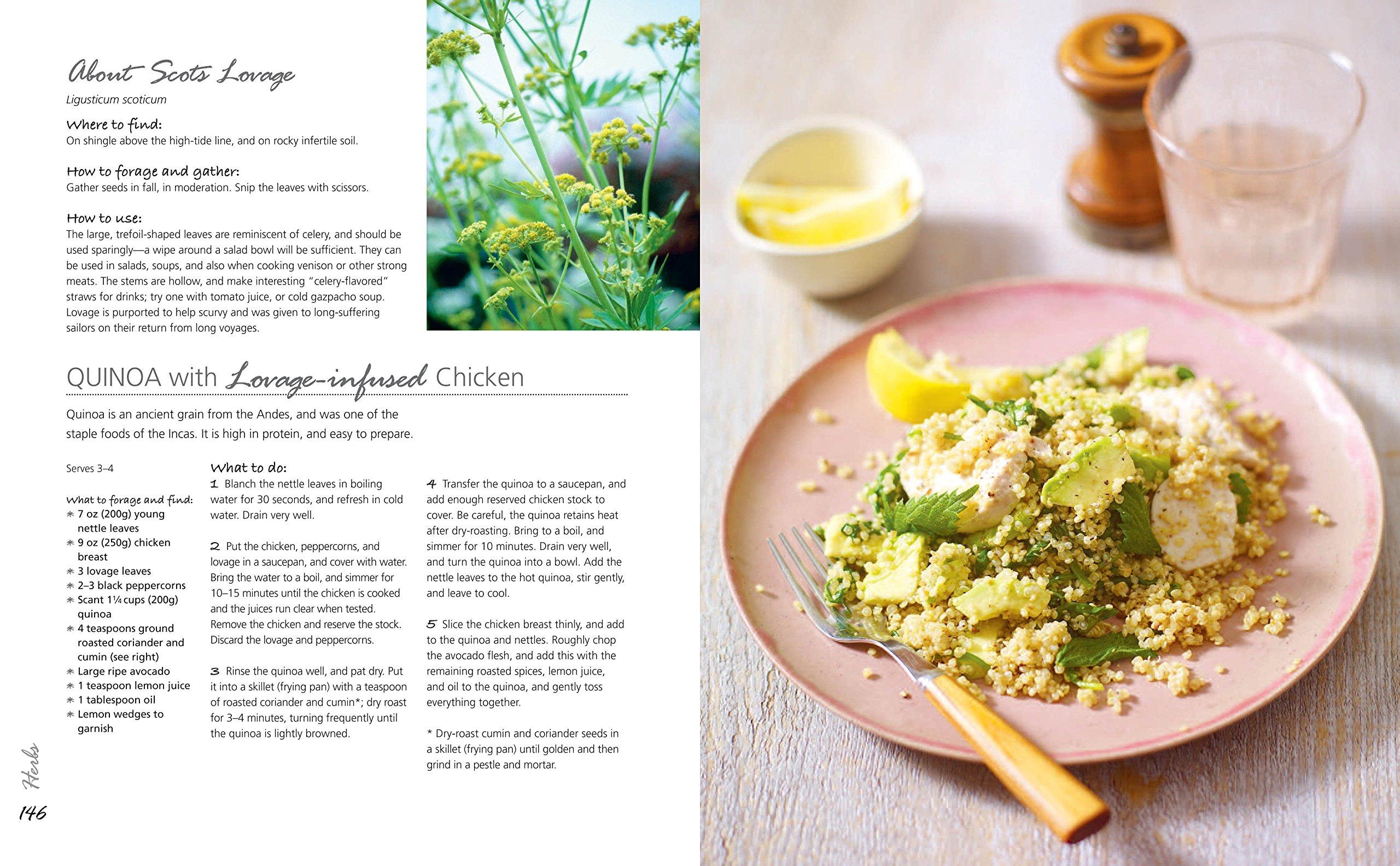 The Forager's Kitchen: Over 100 Fieldtotable Recipes: Fiona Bird:  0001782494049: Amazon: Books