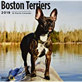 Boston Terrier 2019 (BREEDS)