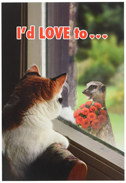 Amazoncom 2143 Cat Flowers Humorous Valentines Day Paper Card
