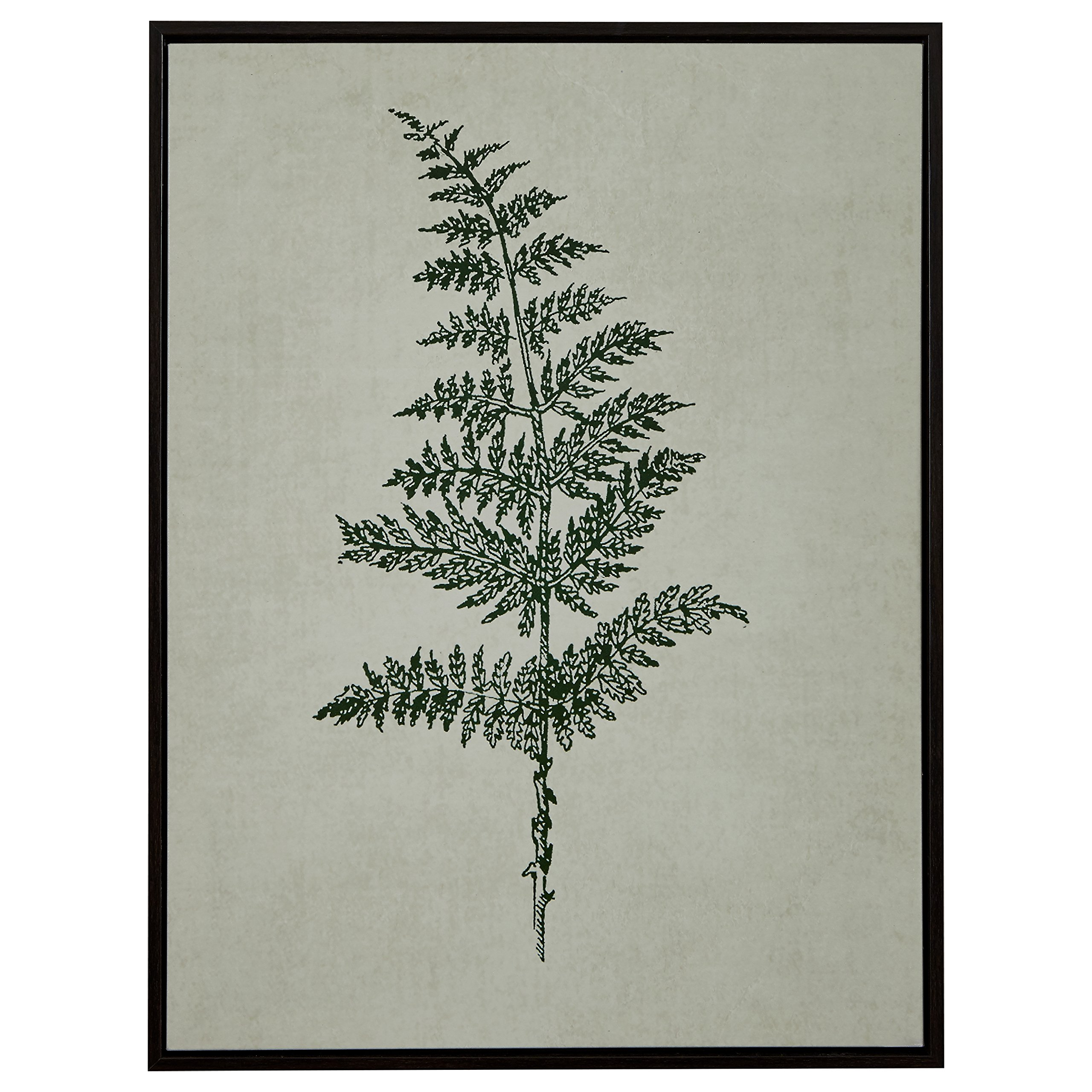 Modern Print of Green Fern, Espresso-Color Frame, 31.75'' x 41.75'' by Stone & Beam