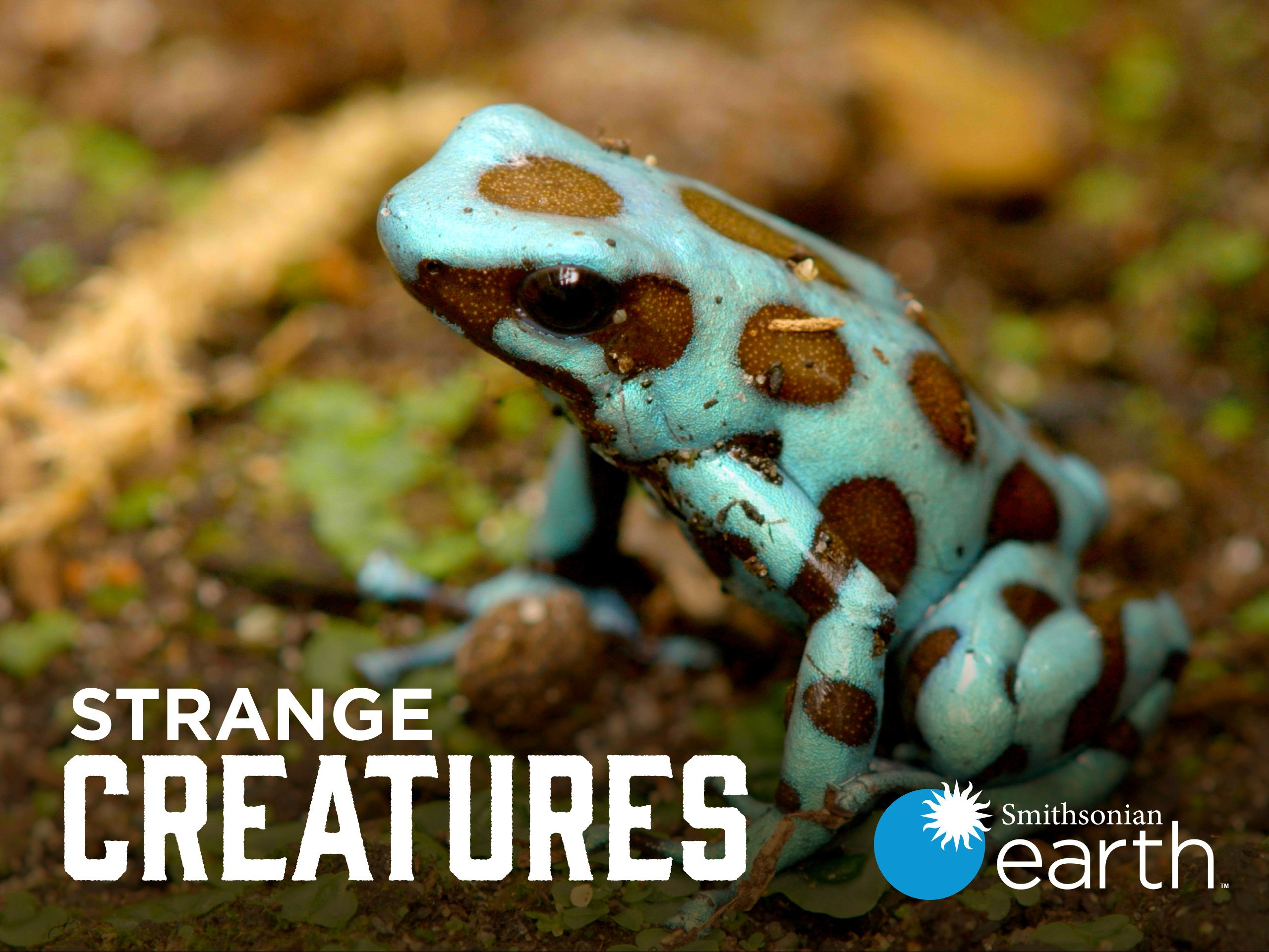 Watch Strange Creatures Season 2 Prime Video