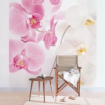Apalis Fototapete Orchidee - Vliestapete - Delicate Orchids ...
