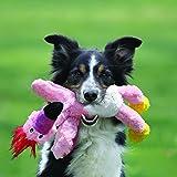 KONG Wild Knots Eagle Dog Toy, Medium/Large