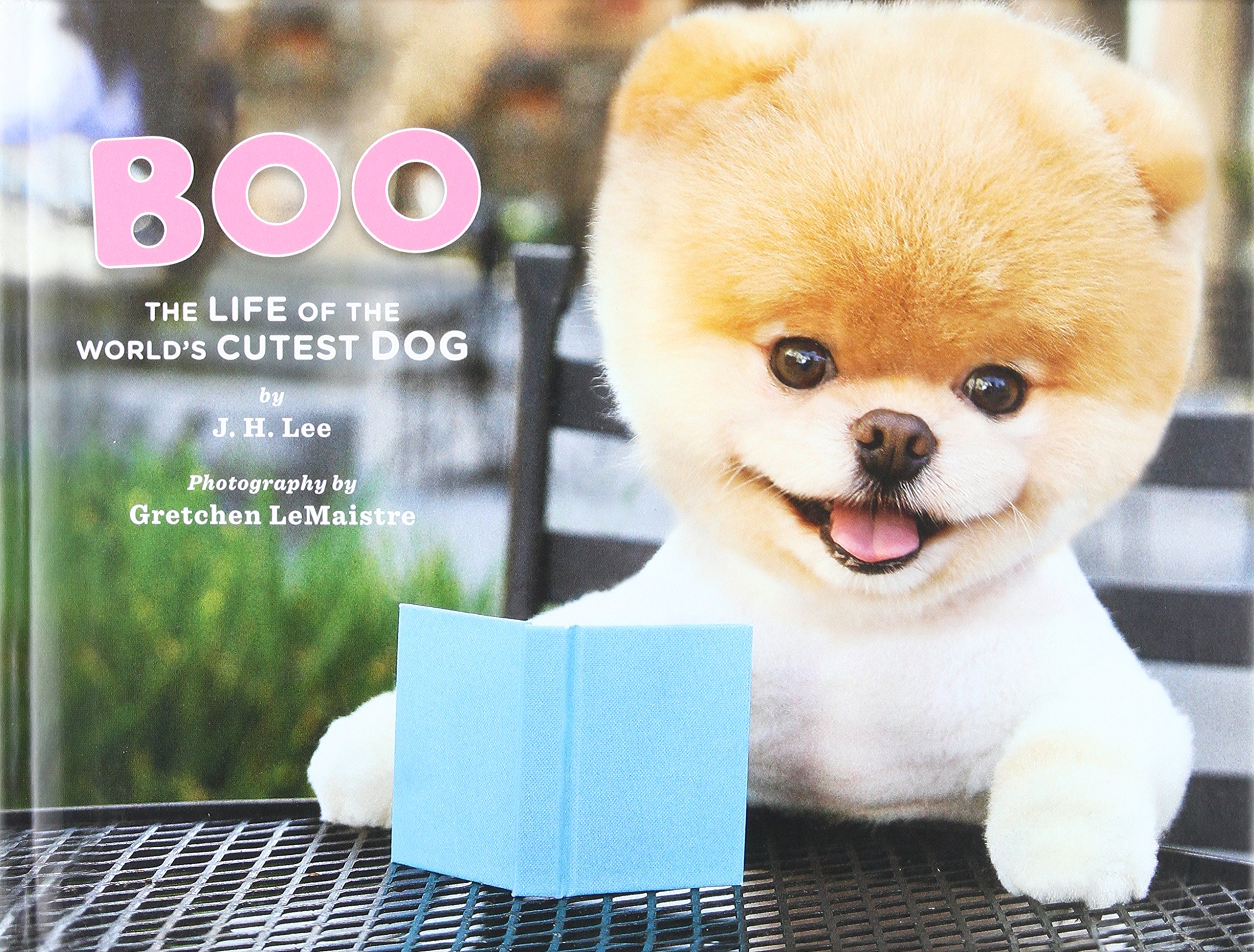 Amazon Com Boo The Life Of The Worlds Cutest Dog 9781452103068 J H Lee Gretchen Lemaistre Books