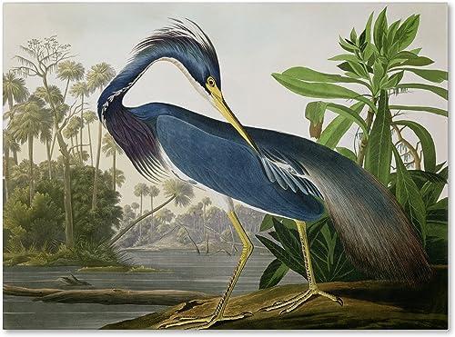 Louisiana Heron Artwork