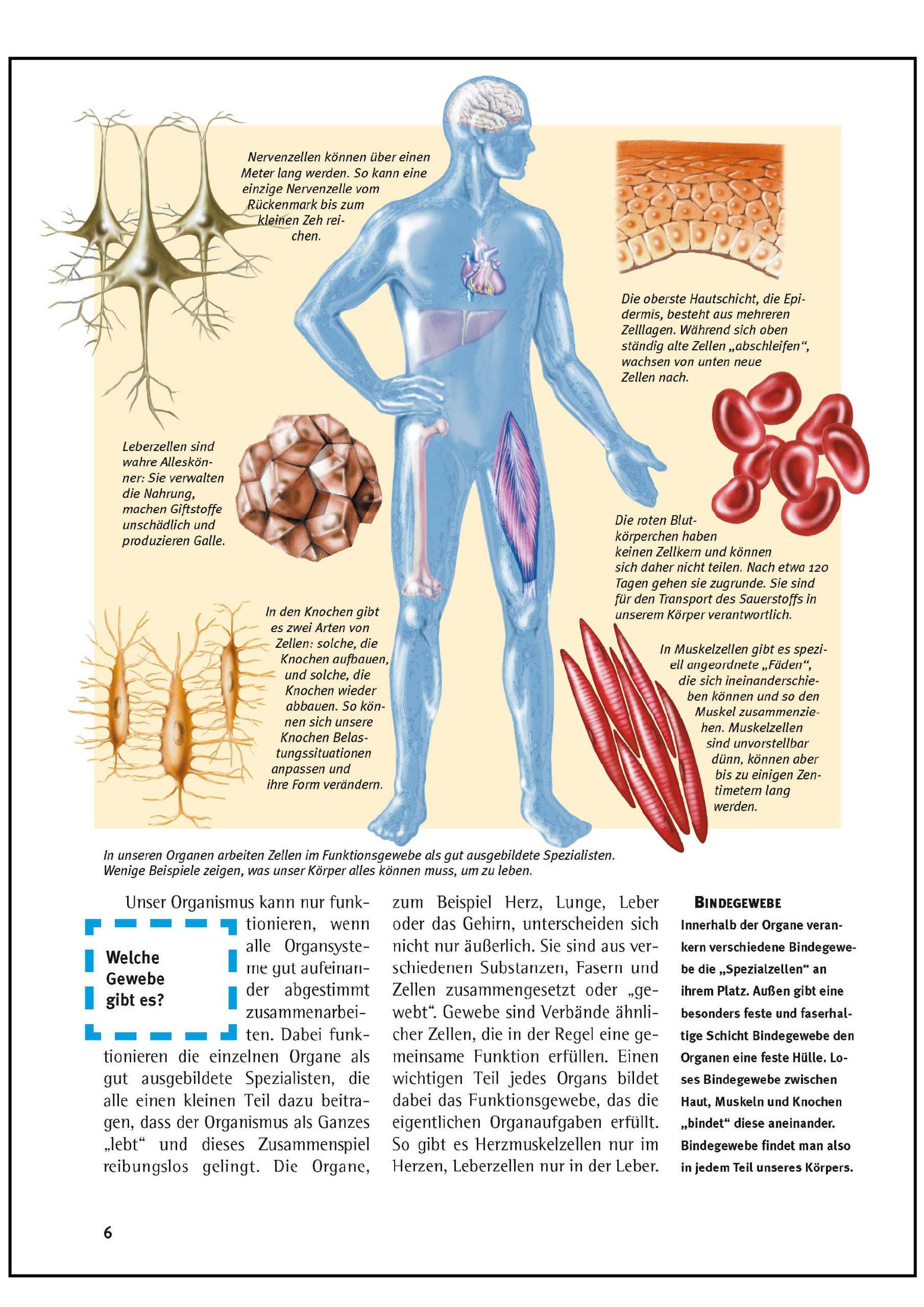 Was ist was, Band 050: Der menschliche Körper: Amazon.de: Kirsten ...