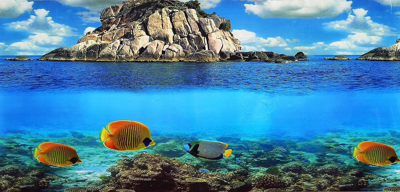 Pistacho Pet - Póster de doble cara para fondo de acuario, 48 x 100 cm.: Amazon.es: Productos para mascotas
