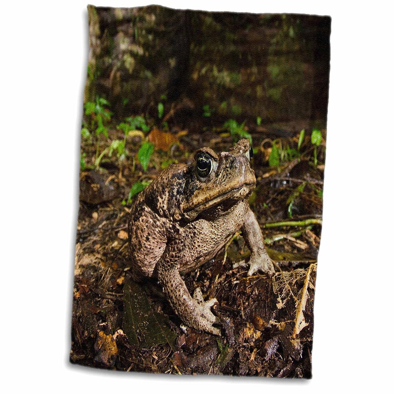 3D Rose Cane Toad-Rhinella Marina-Yasuni- Rainforest-Ecuador Hand Towel, 15' x 22'