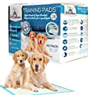 "PetCellence Puppy Training Pads - Premium Ultra Absorbent Large Pee Pads for Dogs - Size 24"" x 24"" - Perfect Leak-Proof Pet Pad for Car Seat, Dog Bed, Litter Boxes & Cages - Protect Floors & Carpets"