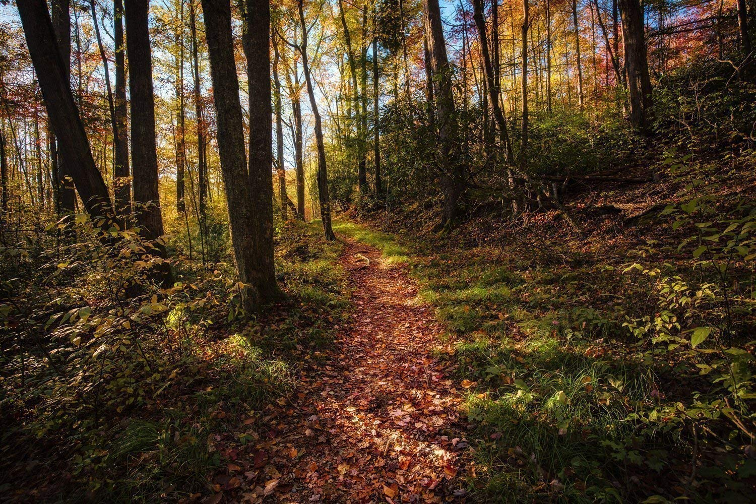 Forest Photography Art Print - Picture of Trail During Fall in the Great Smoky Mountains Nature Home Decor 5x7 to 40x60