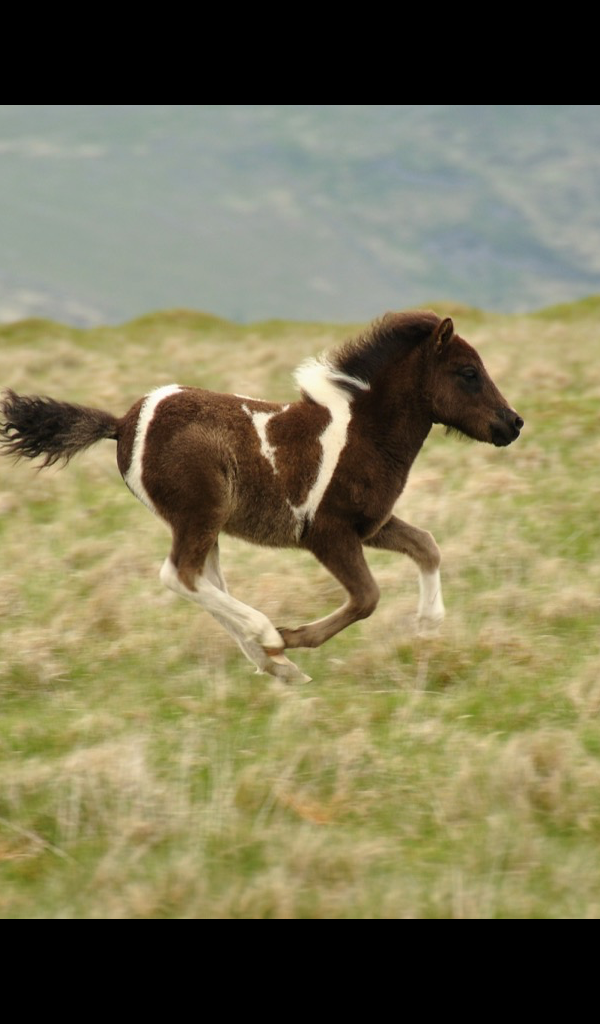 foal or horse backgrounds for computers