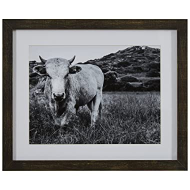 Modern Black and White Photo of Bull Wall Art  in Charcoal Frame, 15  x 13