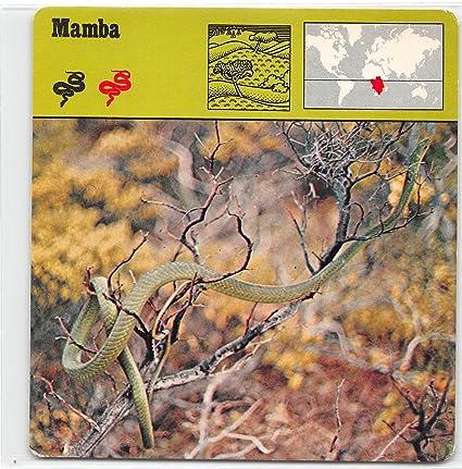 Mamba rencontre rencontre espagne rencontre gratuit contacte