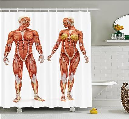 Anatomía Humana cortina de ducha por Ambesonne, macho y hembra los ...