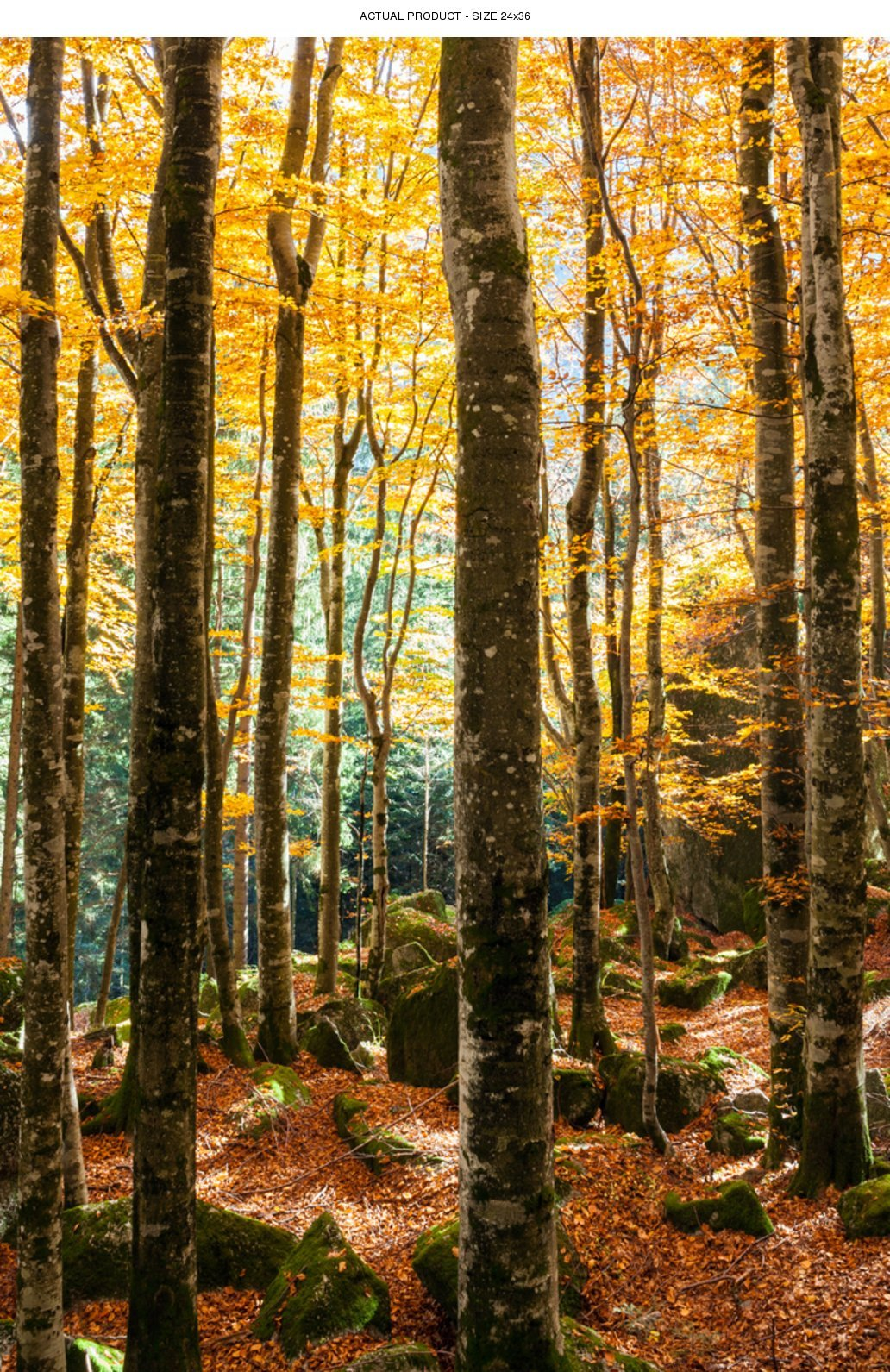 Windowpix 24x36 Inch Decorative Static Cling Window Film Fall Forest Path Printed on Clear for Window Glass Panels. UV Protection, Energy Saving.