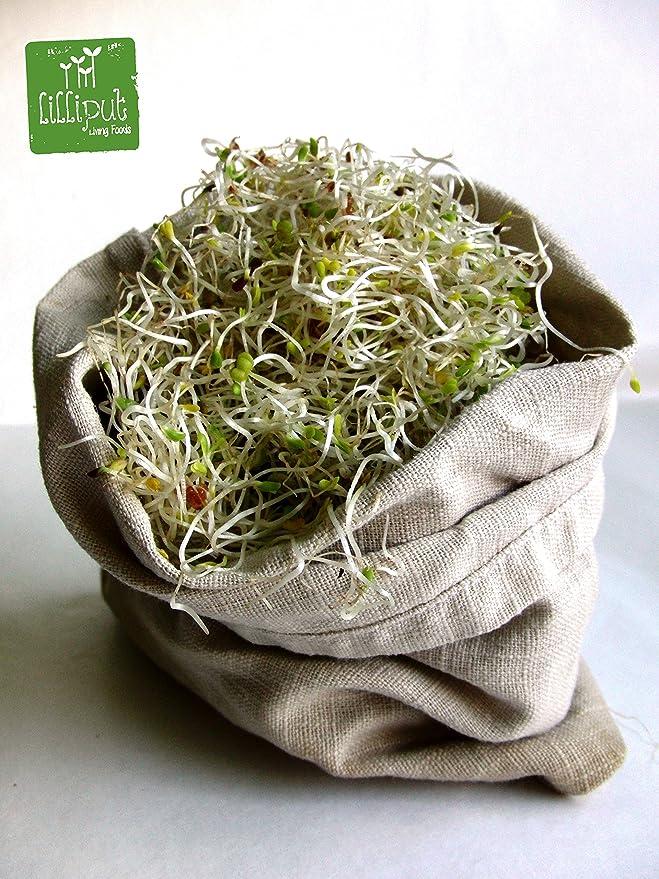 LILLIPUT LIVING FOODS Kit Germinación EN Bolsa DE Cáñamo Natural 100%: Amazon.es: Jardín