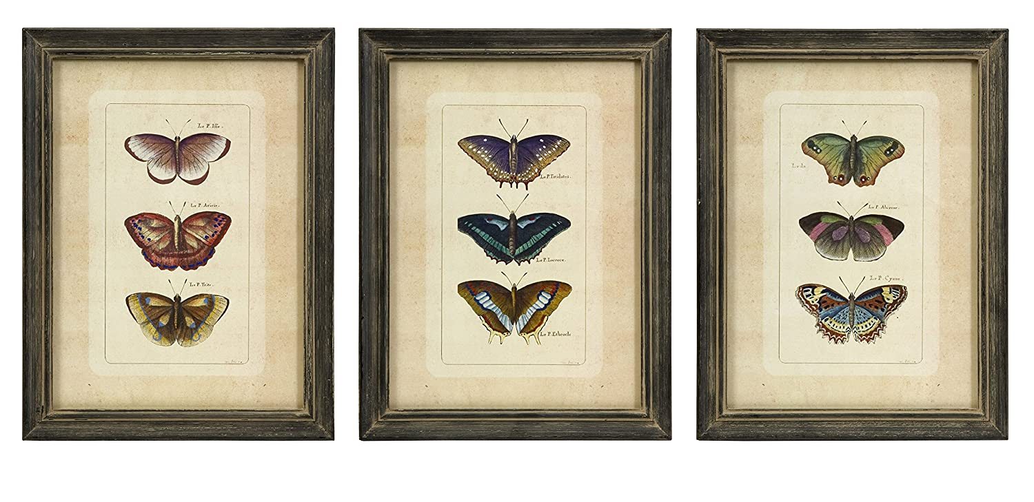 Amazon.com: IMAX 27304-3 Butterfly Collection Wall Art, Set of 3 ...