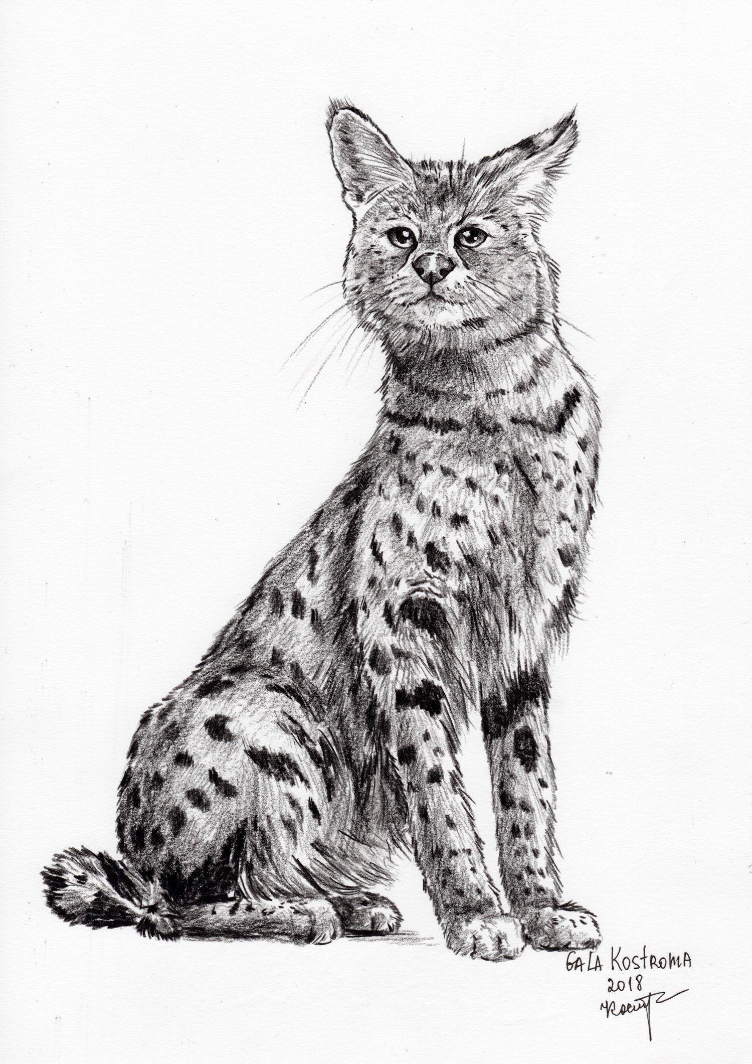 Serval original Gala Kostroma cat watercolor animal drawing pet painting
