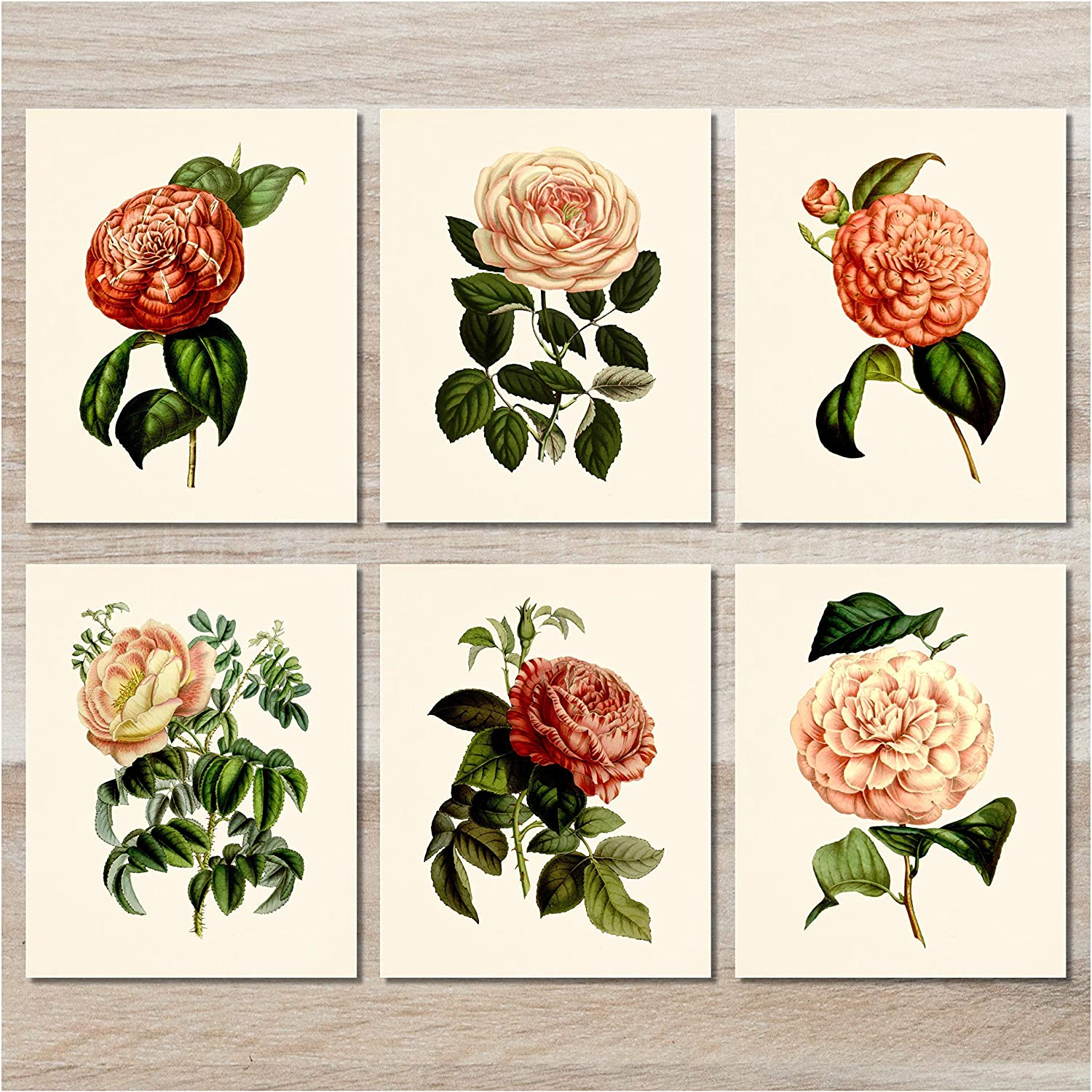 Flower wall art botanical prints set of 6 8x10 unframed vintage floral decor