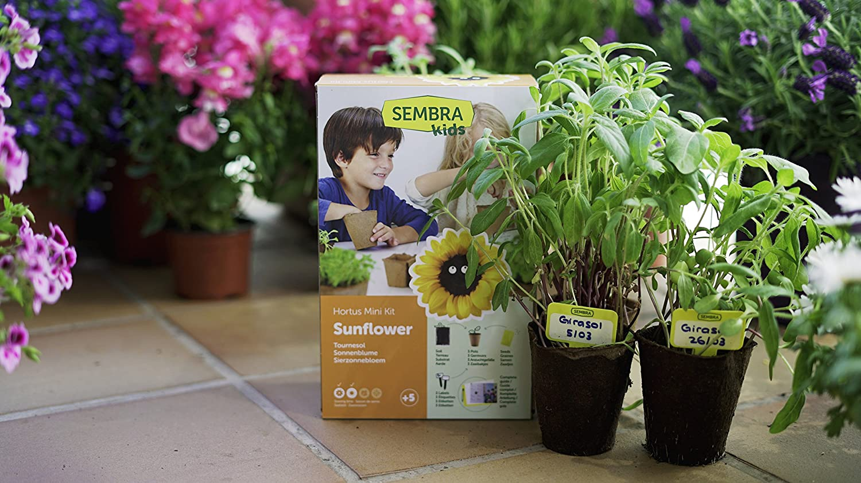 SEMBRA - juego educativo, Kit huerto Albahaca: Amazon.es: Jardín