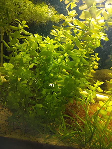 Shrimp Safe Sale Price Osmocote Root Tabs For Planted Aquariums Vegetarian Capsules