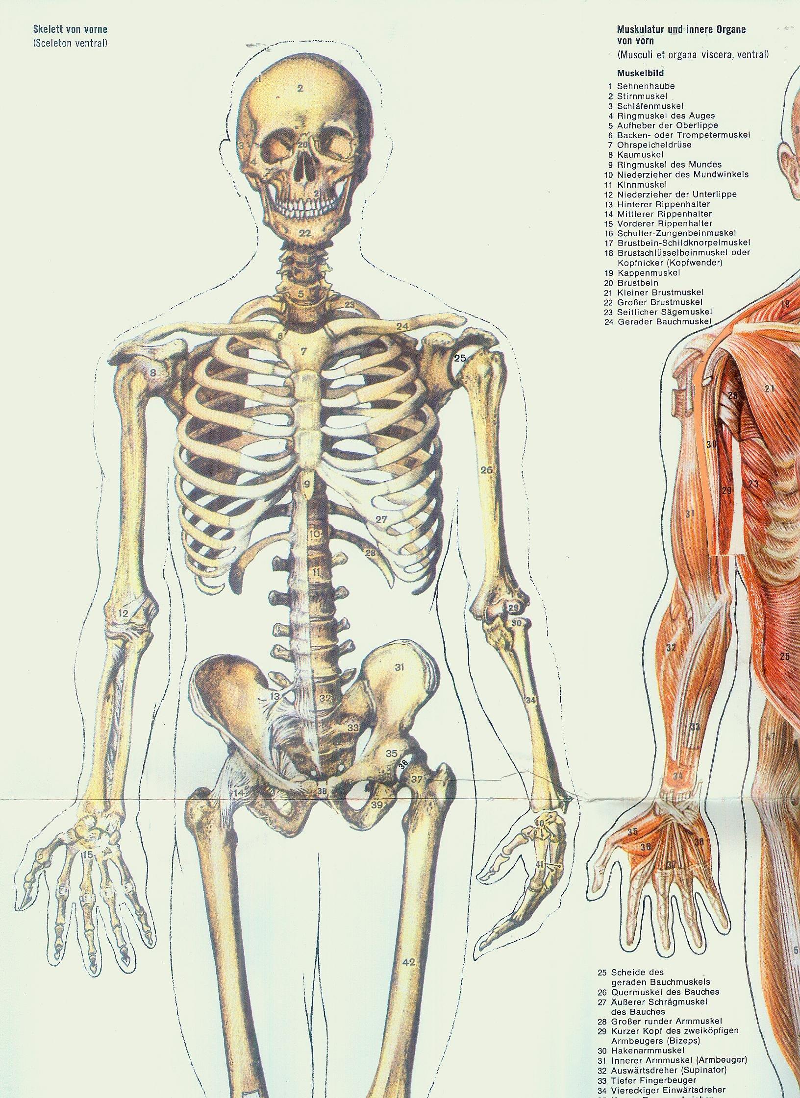Charmant Innere Des Mundes Anatomie Galerie - Anatomie Ideen ...