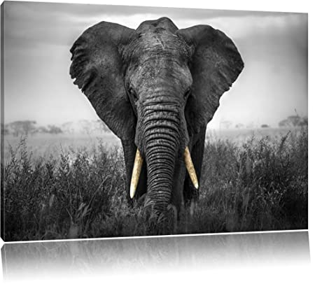 Magnificent elephant black white format 100x70auf canvas xxl huge pictures completely framed with stretcher