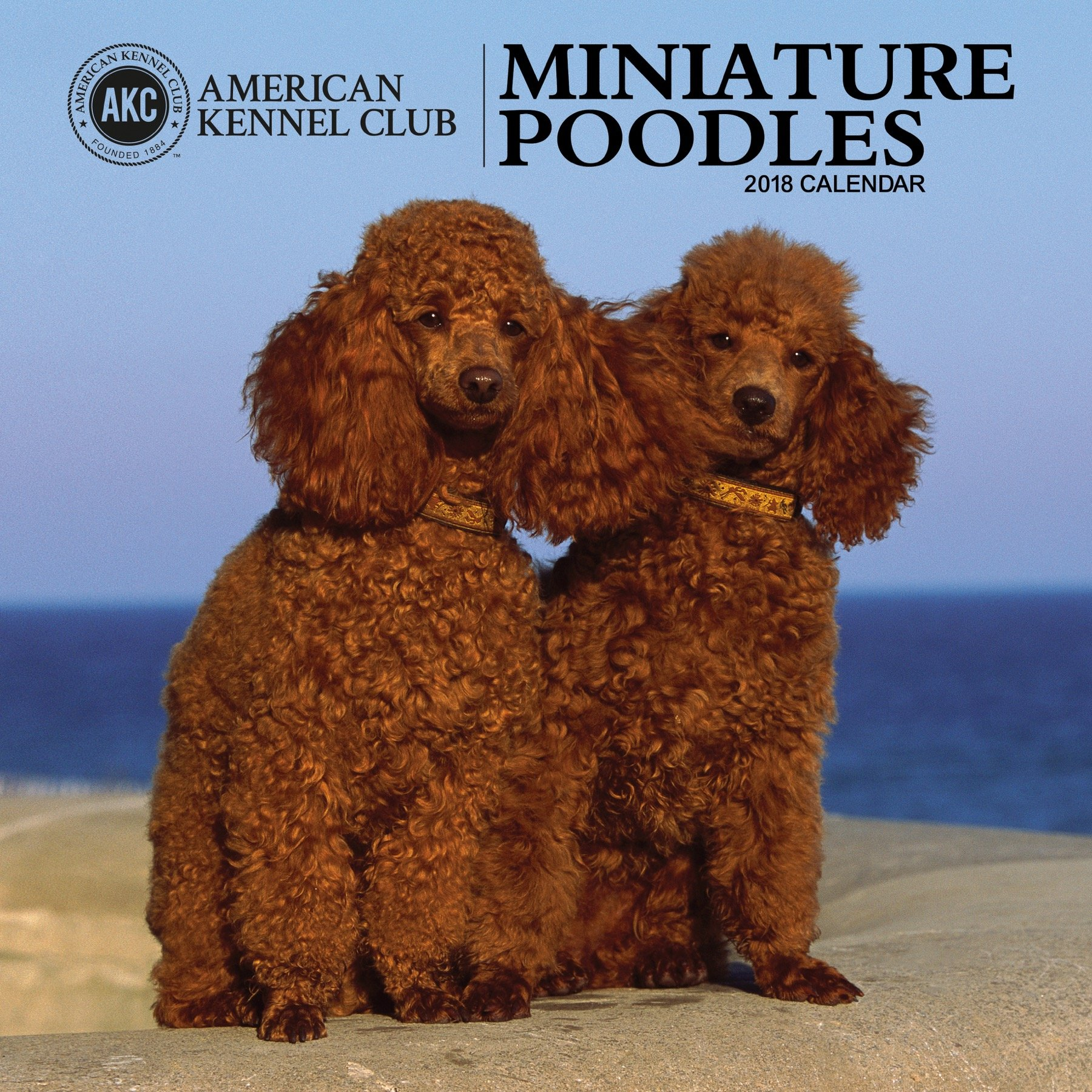 American Kennel Club Miniature Poodles 2018 Wall Calendar