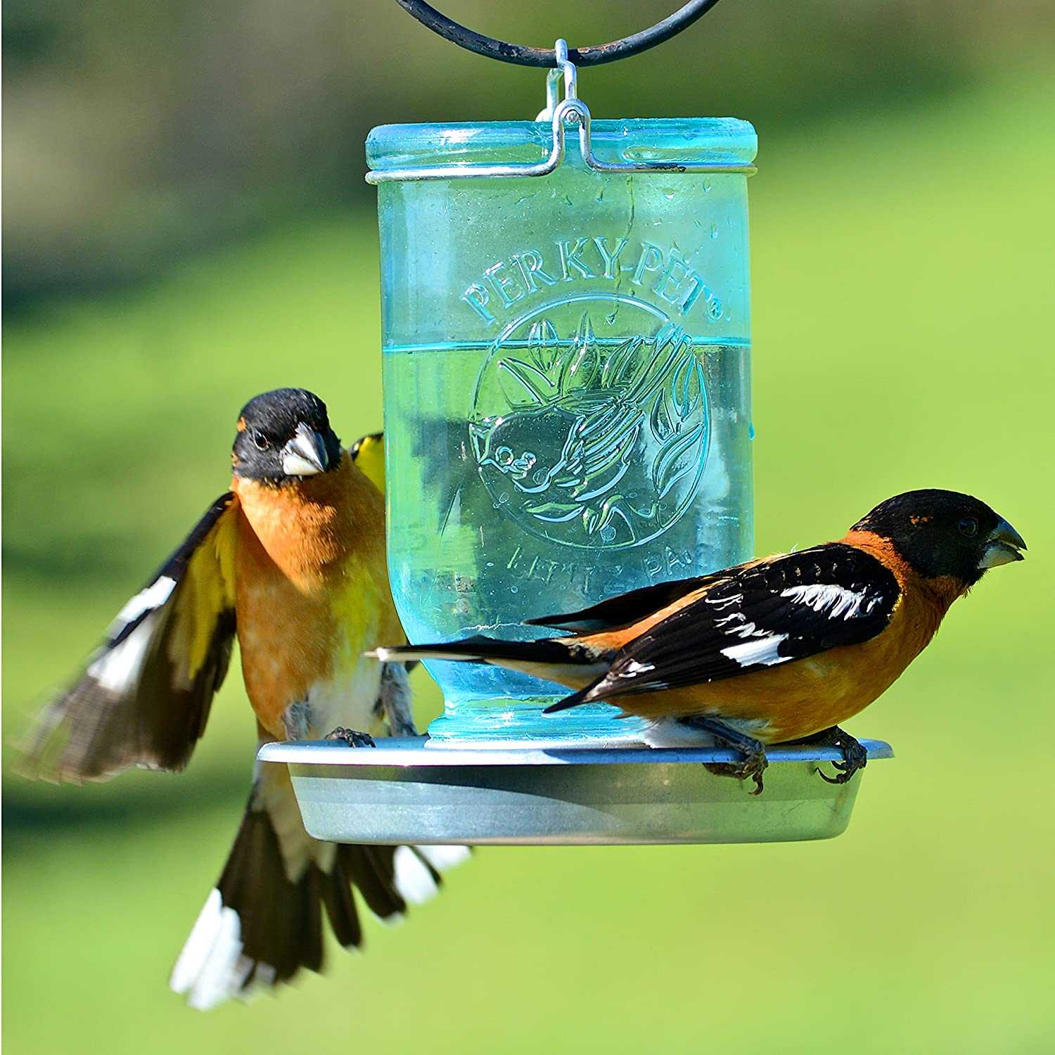 amazon com perky pet mason jar wild bird waterer 783 garden