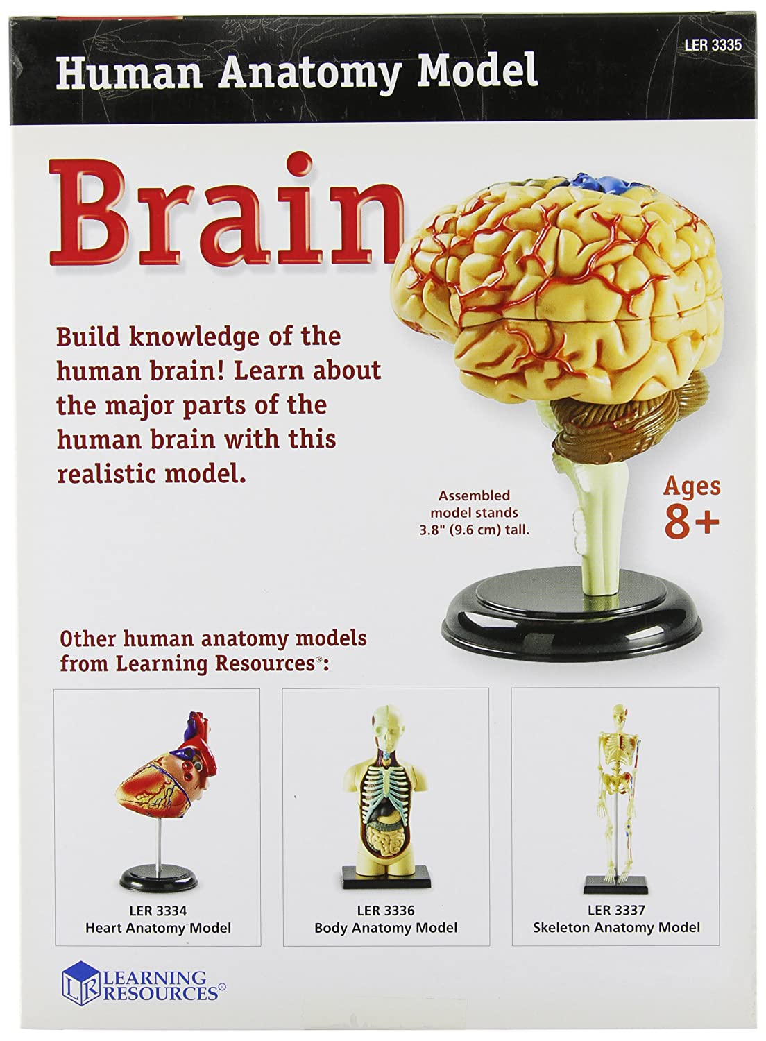 Learning Resources Brain Model Toys Games Simple Diagram For Kids Crafts Activities