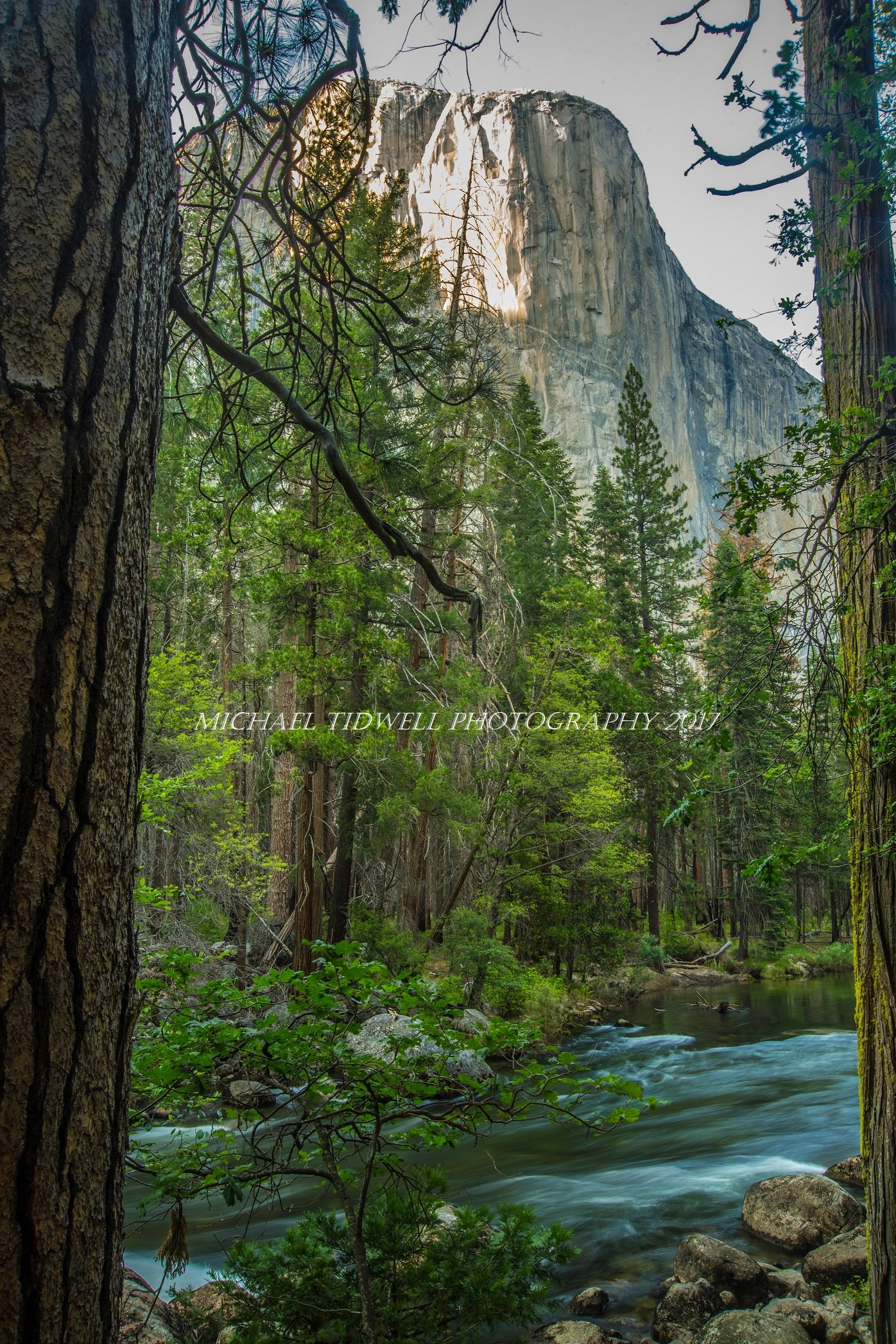 Yosemite's El Capitan Canvas Print by Michael Tidwell Photography by Michael Tidwell Photography