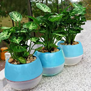 Kurtzy Self Watering Flower Pot for Garden Planters Indoor Outdoor Living Room Bedroom Balcony Table Vase Home Decor Pack of 3 Blue