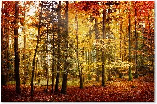 Brilliant Fall Color Artwork