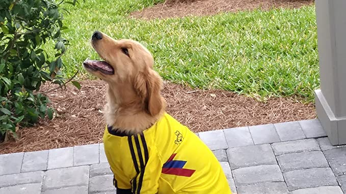 Amazon.com : Colombia DOG T-Shirt camisetas para perros Colombiano Hasta las Pulgas (S) : Pet Supplies