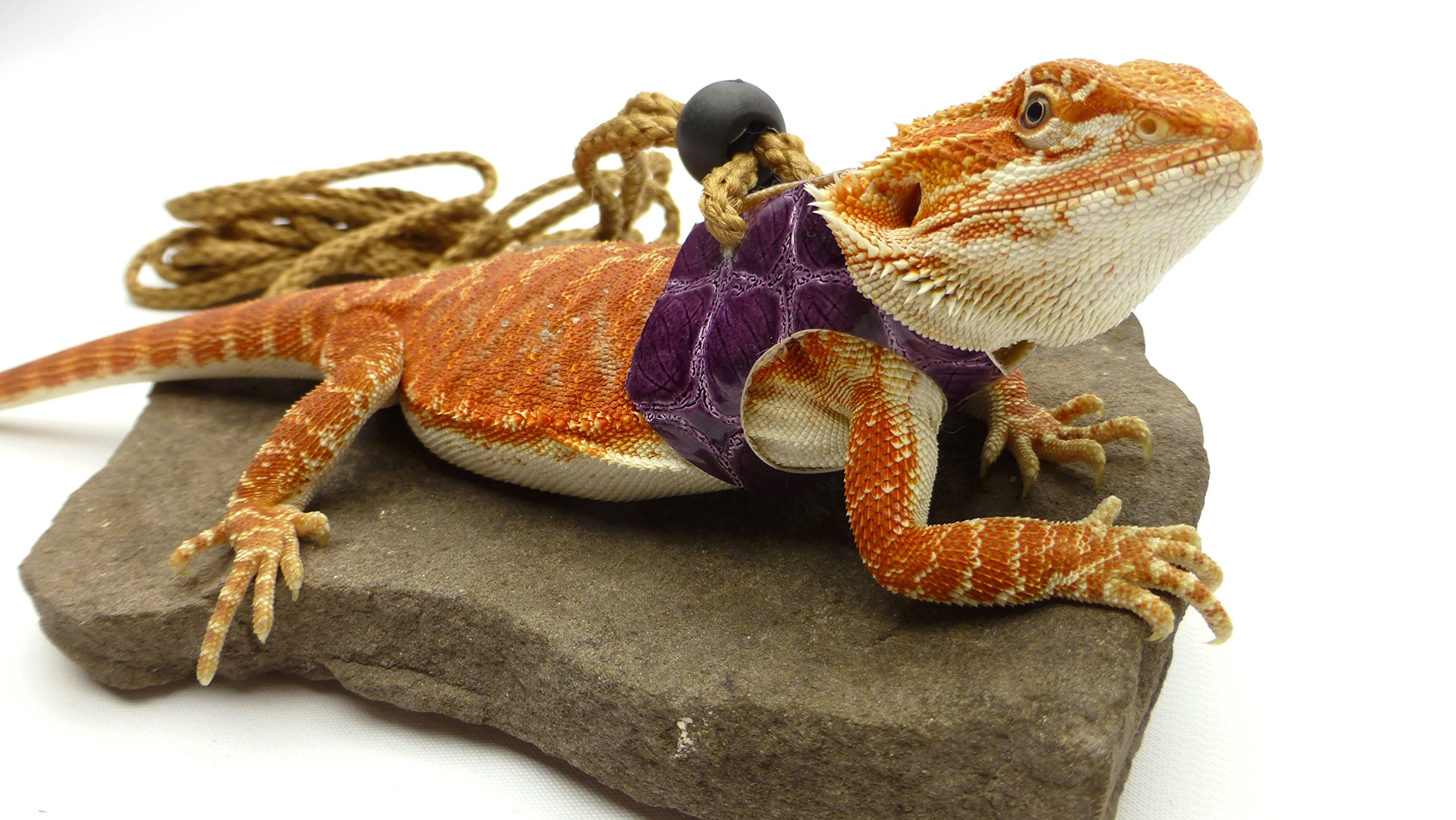 Ogle Lizard Leash, Limited Edition Purple Scales (medium size)